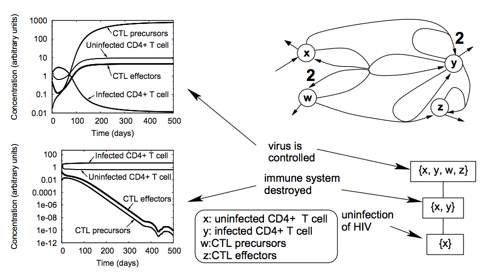 A Case Study of Chemical Organization Theory Applied to Virus Dynamics